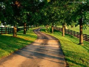 droga do bogactwa - wolność finansowa